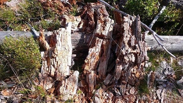 Verwitterndes Holz